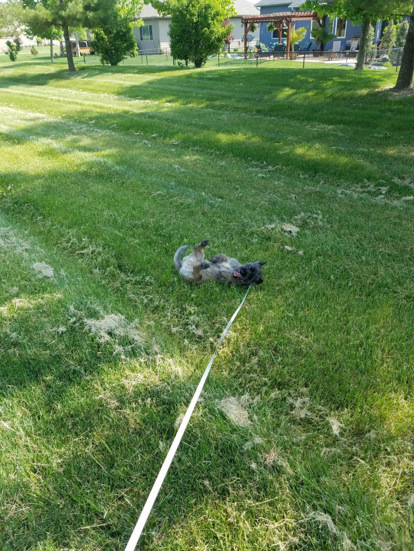 Bud_rolling_in_grass