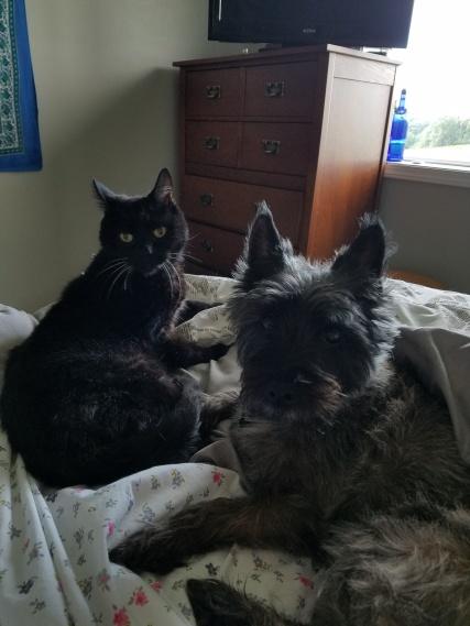 kitty_and_buddy